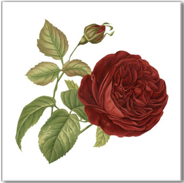 Deep Red Rose Ceramic Wall Tile