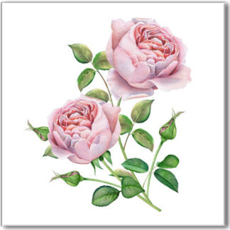 Rose ceramic wall tile, two pale pink roses on square white background