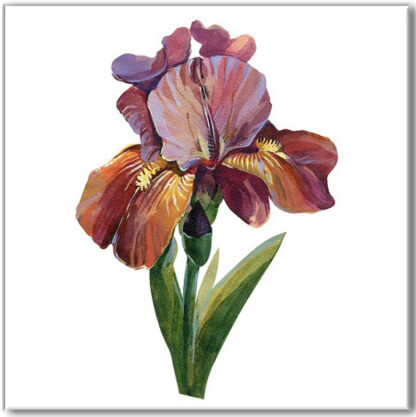 Ceramic wall tile, purple iris flower on a white square background