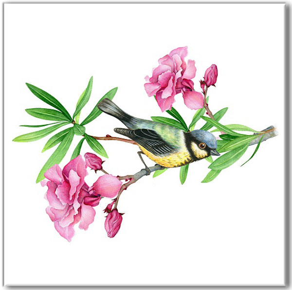 Vintage style wall tile, blue tit bird perched on a pink flower branch, on a white square background