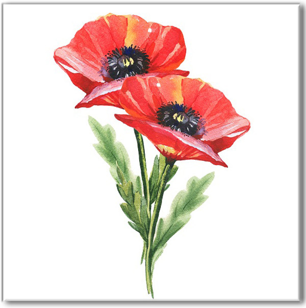 Floral ceramic wall tile, two red poppies on a white square background