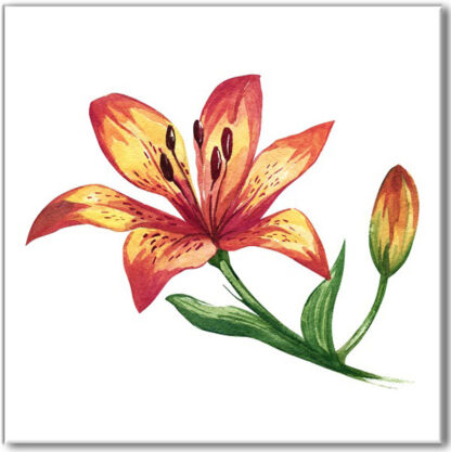 Floral ceramic wall tile, red and yellow lily with bud on a white square background