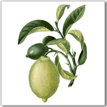 Vintage style wall tile, lemon fruit on branch with a white square background