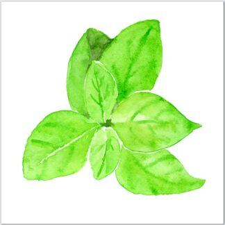 Basil Herb Ceramic Wall Tile