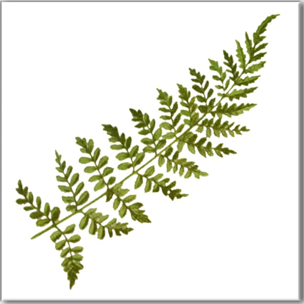 Ceramic wall tile with green fern leaf design