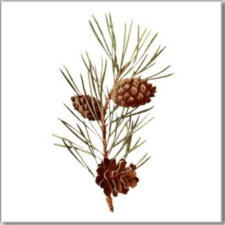 Ceramic wall tile with Fir tree needles and cones design on a white square background