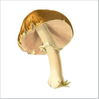 Ceramic wall tile with mushroom image on a white square background