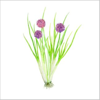 Chives herb, leaves and flowers on a white background, ceramic wall tile