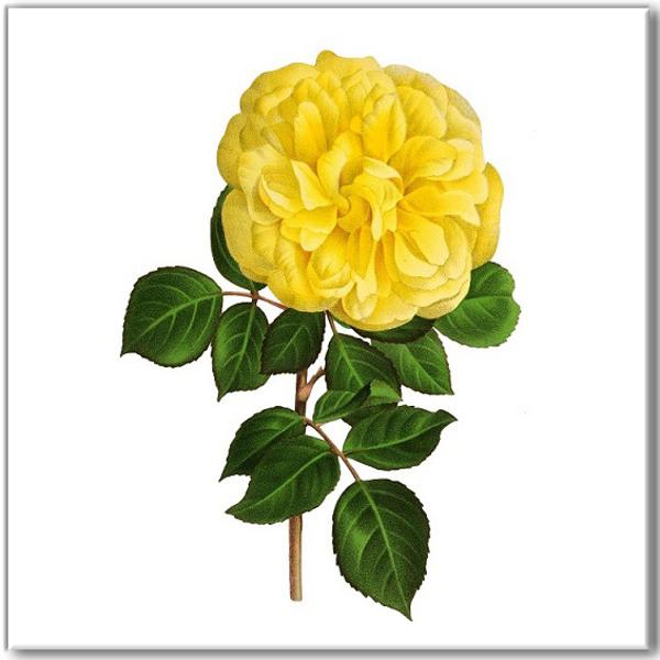 Rose Tiles Ideas - Yellow Rose Ceramic Wall Tile