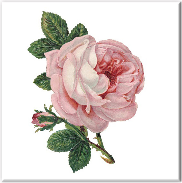 Shabby Chic Tiles - Pale Pink Rose Ceramic Wall Tile