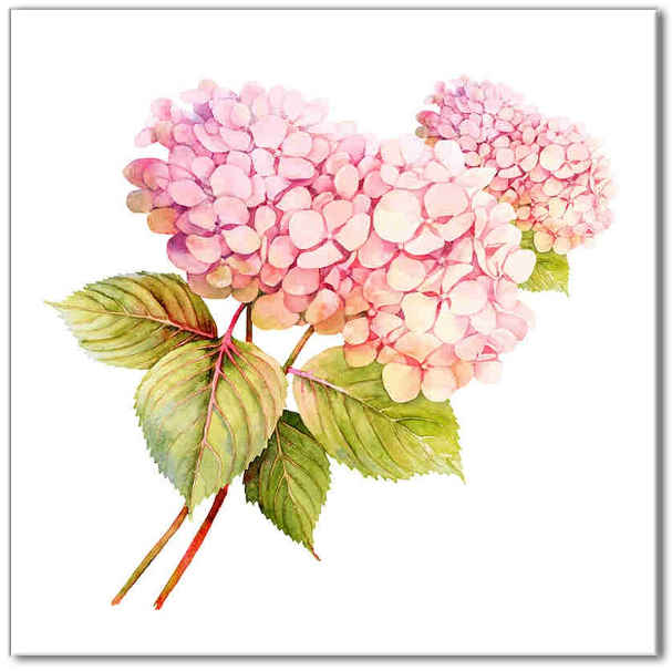 Shabby Chic Tiles - Pink Hydrangea Ceramic Wall Tile