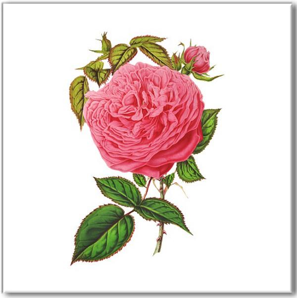 Pink Tiles - Hot Pink Rose Wall Tile