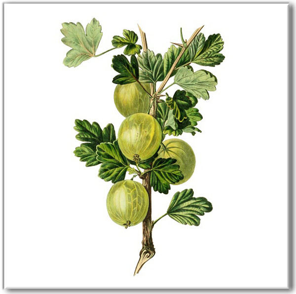 Green Tiles - Gooseberry Fruit Ceramic Wall Tile