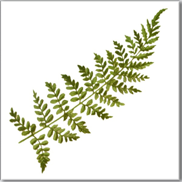 Green Tiles - Green Fern Leaf Ceramic Wall Tile
