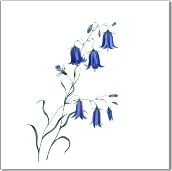 Blue Tiles - Harebell flower ceramic wall tile