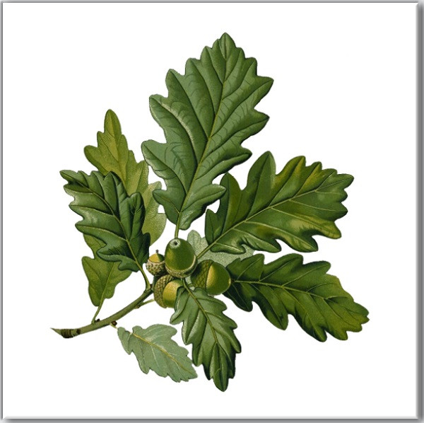 Green Tiles - Green Oak Tree Leaves with Acorns
