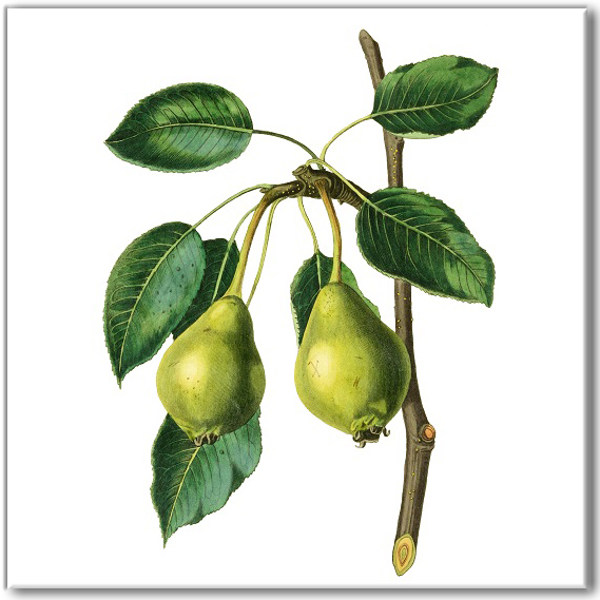 Kitchen tiles ideas - green plums on a branch ceramic wall tile