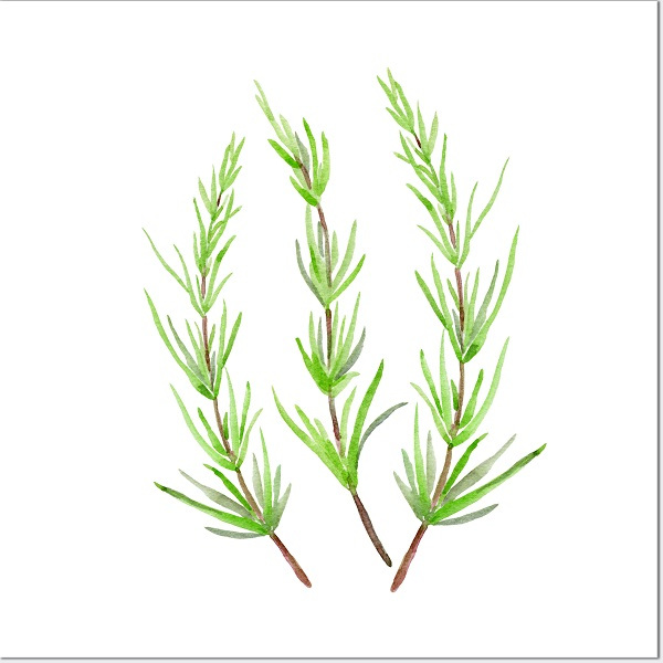 Kitchen tiles ideas - Rosemary herb ceramic wall tile