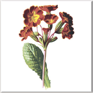 Primula Flowers Ceramic Wall Tile