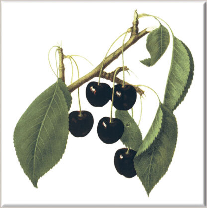Black Cherry Fruit Ceramic Wall Tile