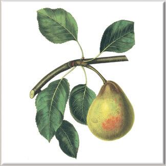 Comice Pear Fruit Ceramic Wall Tile