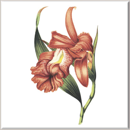 Coppery Red Iris Flower Ceramic Wall Tile