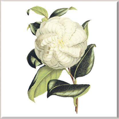 Cream Dahlia Flower Ceramic Wall Tile
