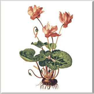 Cyclamen Flower Ceramic Wall Tile