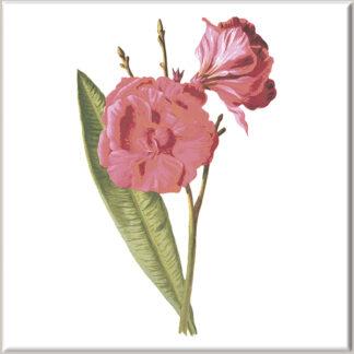 Dark Pink Dianthus Flowers Ceramic Wall Tile