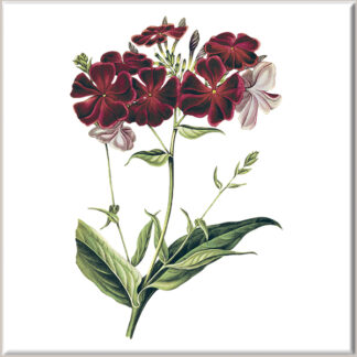 Deep Red Dianthus Flowers Ceramic Wall Tile