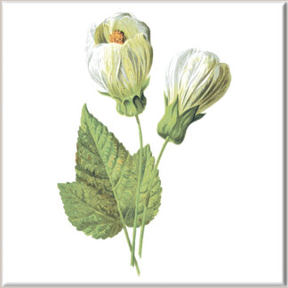 Flowering Maple Ceramic Wall Tile