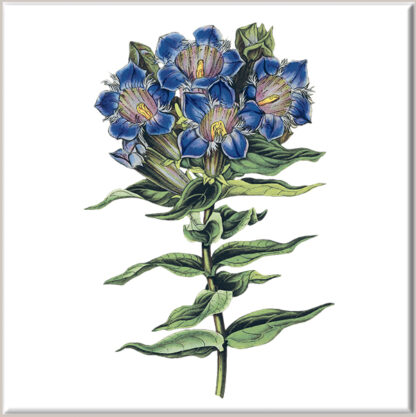 Gentian Flower Ceramic Wall Tile