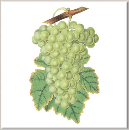 Green Grapes Ceramic Wall Tile