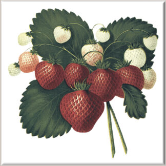 Hanging Strawberry Fruit Ceramic Wall