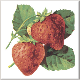 Large Strawberry Fruit Ceramic Wall Tile