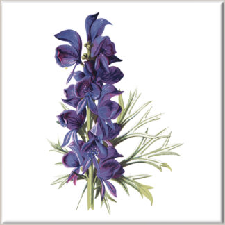 Monkshood Flowers Ceramic Wall Tile