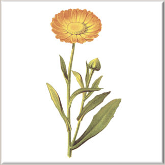 Orange Chrysanthemum and Bud Ceramic Wall Tile