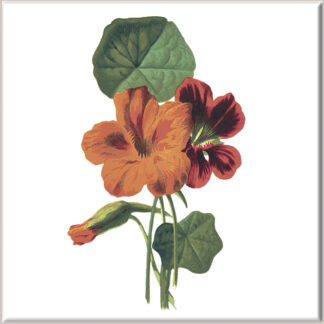 Orange Nasturtium Flowers Ceramic Wall Tile