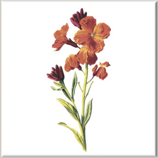 Orange Wallflower Ceramic Wall Tile