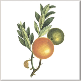 Oranges Ceramic Wall Tile