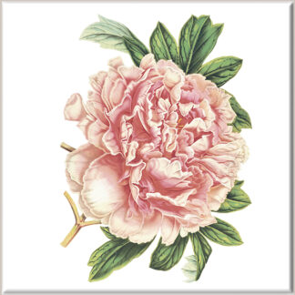 Peach Peony Flower Ceramic Wall Tile