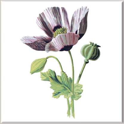 Pink Variegated Poppy Ceramic Wall Tile