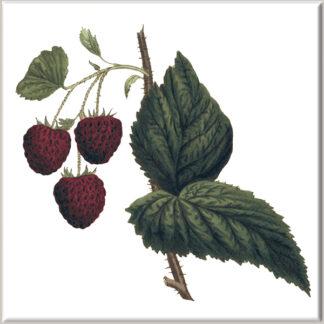 Raspberry Fruit on Stem Ceramic Wall Tile