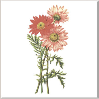 Red Chrysanthemum Flowers Ceramic Wall Tile