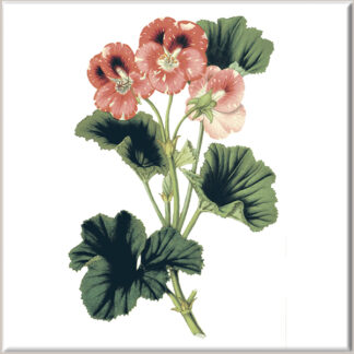 Red Geranium Flowers Ceramic Wall Tile