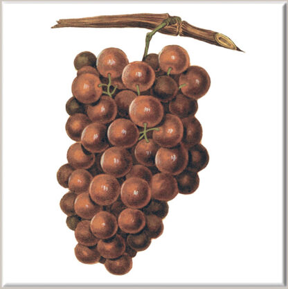 Red Grapes Ceramic Wall Tile