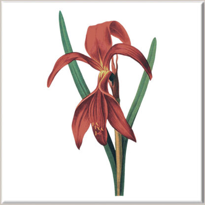 Red Iris Ceramic Wall Tile