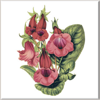 Red Penstemon Flowers Ceramic Wall Tile