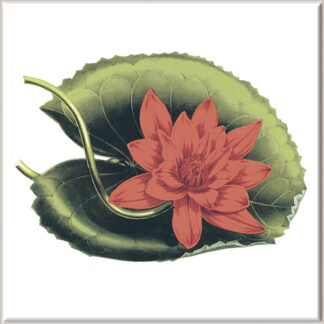 Red Waterlily Flower Ceramic Wall Tile