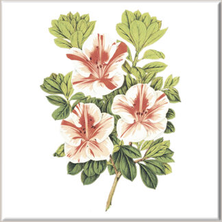 Red and White Azalea Flowers Ceramic Wall Tile